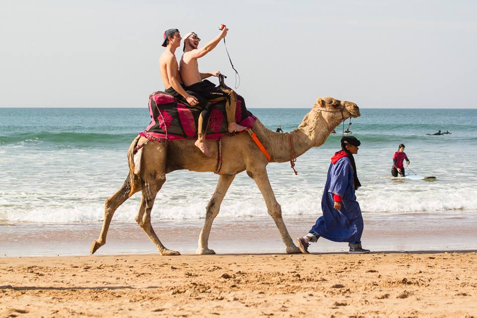 Taghazout Surf and Yoga camel ride on the beach