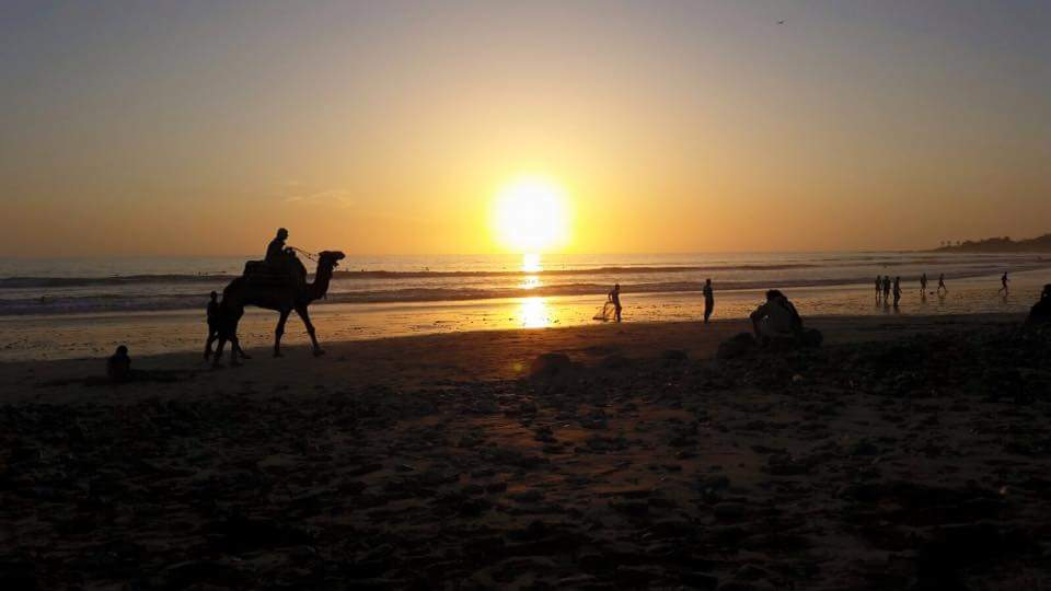 Camel ride on the beach while sun goes down